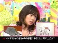 井上和香ちゃん 動物奇想天外04