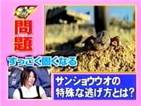 井上和香ちゃん ドリームビジョン 02