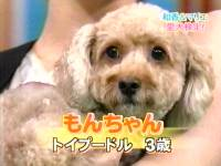井上和香ちゃん 世界まる見え!テレビ特捜部 02